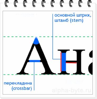 Основные и соединительные штрихи букв шрифта