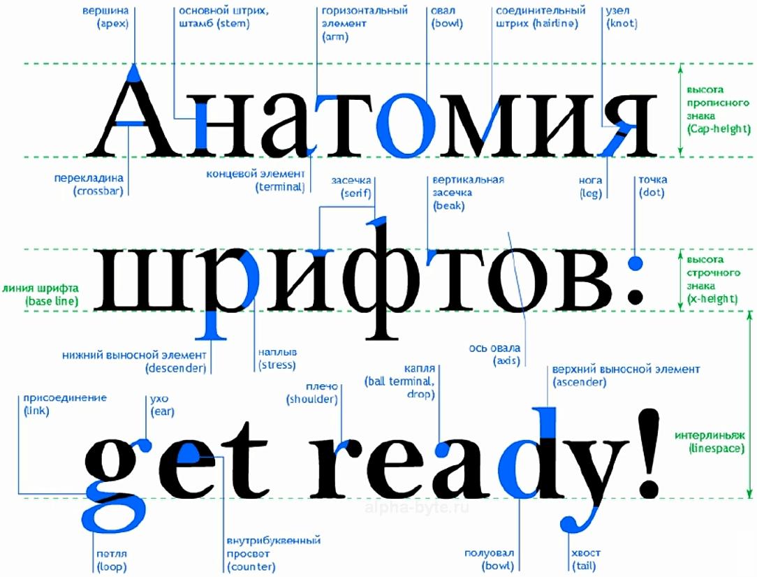 Все основные элементы для построения шрифта в типографике